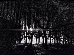 bosco nero